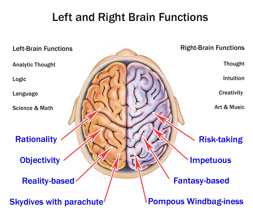Right Brain Left Brain And Diagram Data Wiring Diagrams